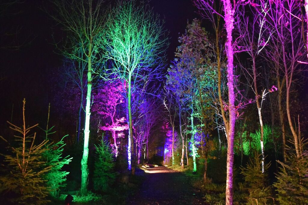 The Woodland Light Experience at North Ballochruin Farm in The Trossachs